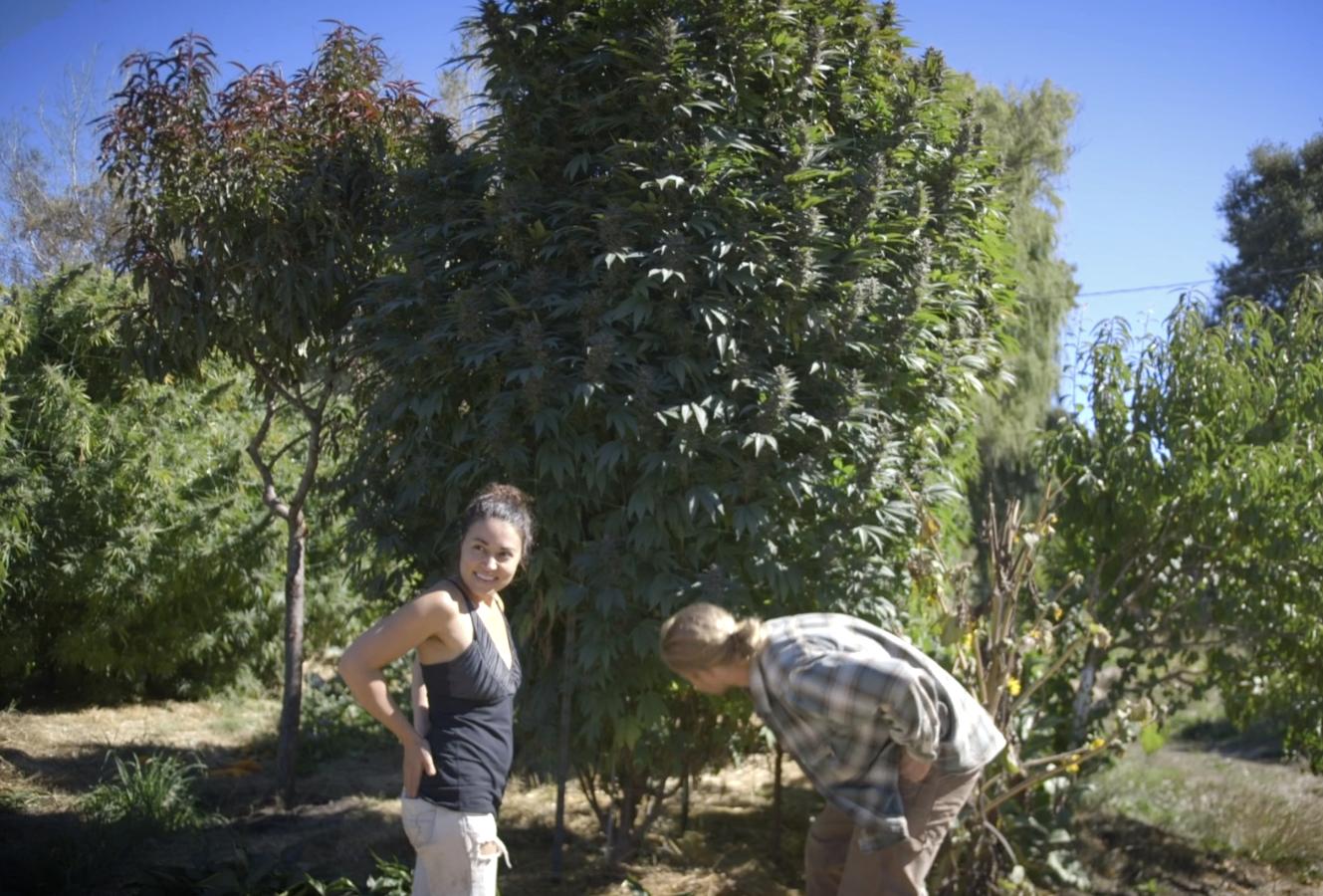 Sun Roots Farm